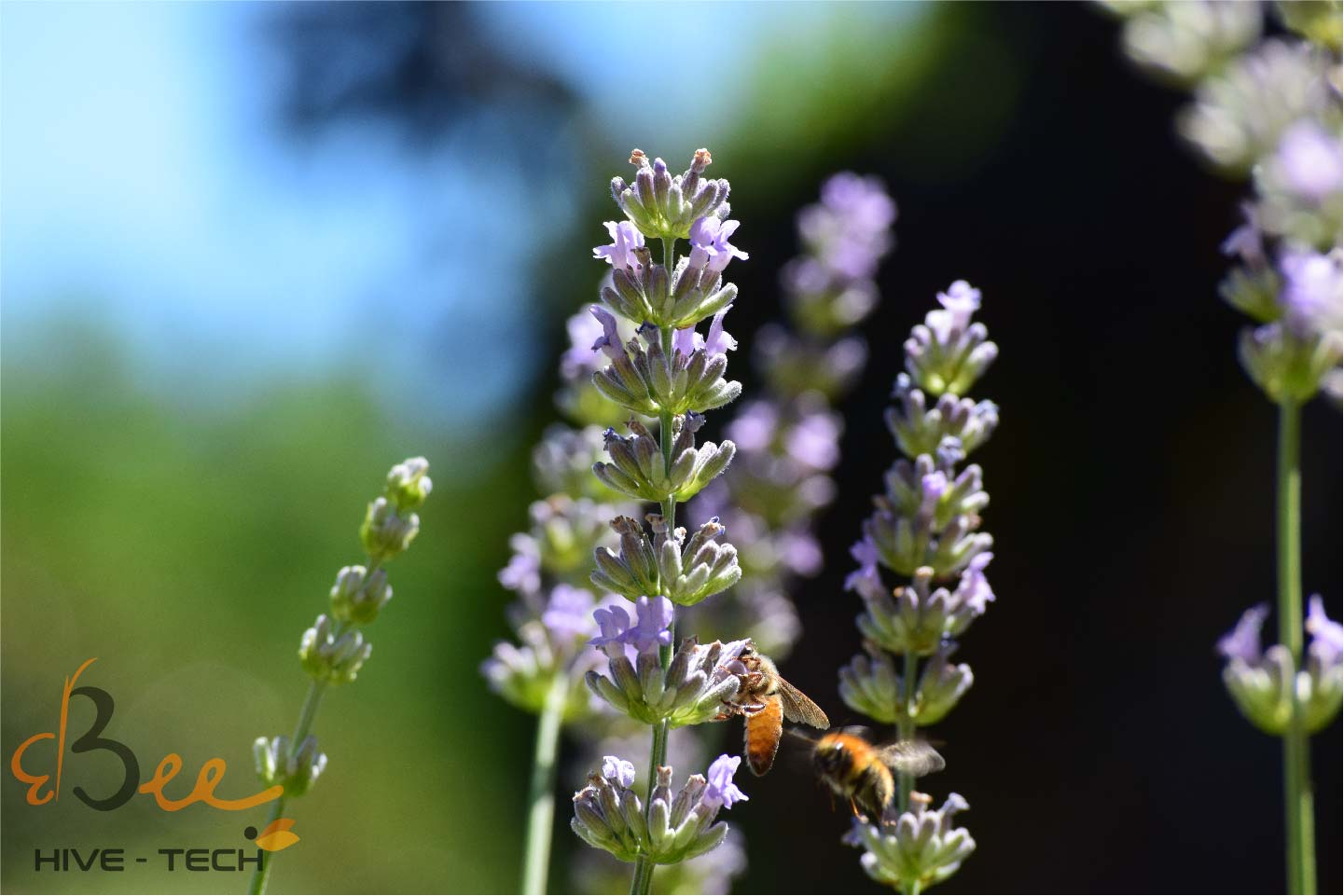 3bee Picture